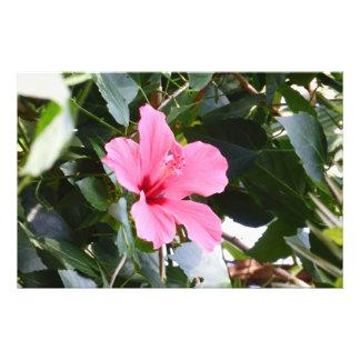 Hibiscus Photo Art