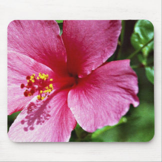 Hibiscus, pink mouse pad