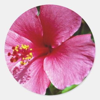 Hibiscus pink round sticker