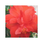 Hibiscus Plant Red Floral Canvas Print