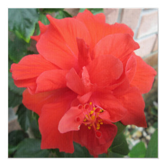 Hibiscus Plant Red Floral Card