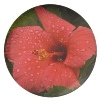 HIbiscus Plate 2 plate