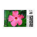 Hibiscus Postage Stamp