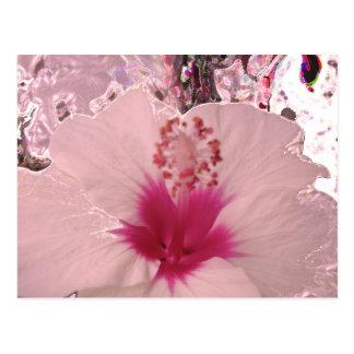 Hibiscus Postcard