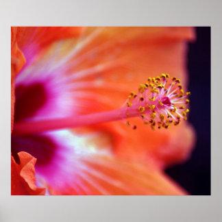 Hibiscus Print