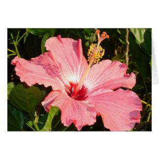 Hibiscus - R Card