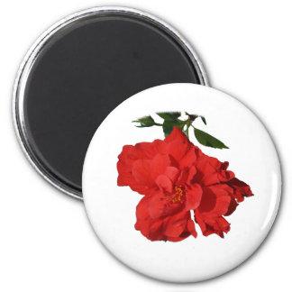 Hibiscus Red Flower Photograph Design 2 Inch Round Magnet
