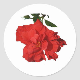 Hibiscus Red Flower Photograph Design Classic Round Sticker