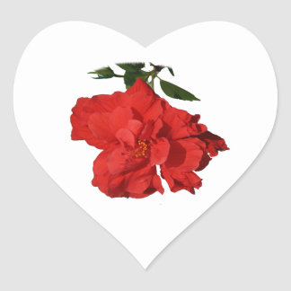 Hibiscus Red Flower Photograph Design Heart Sticker