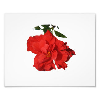Hibiscus Red Flower Photograph Design