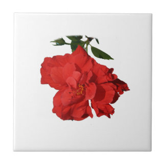 Hibiscus Red Flower Photograph Design Small Square Tile