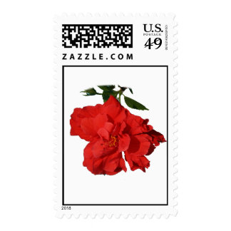 Hibiscus Red Flower Photograph Design Stamp