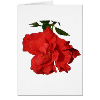 Hibiscus Red Flower Photograph Design Stationery Note Card