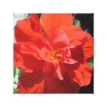 Hibiscus Red Flowering Plant Canvas Prints
