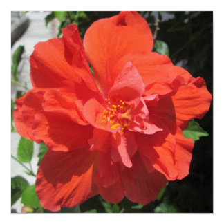 Hibiscus Red Flowering Plant Card