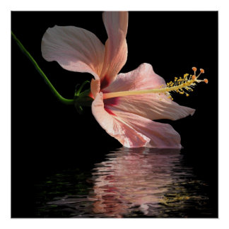 Hibiscus reflection poster