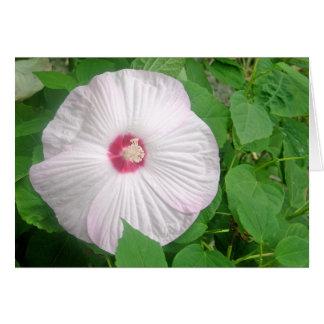 Hibiscus Rosa Greeting Card