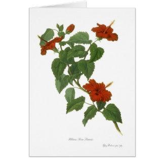 Hibiscus rosa-sinensis greeting card