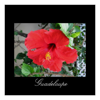 Hibiscus rouge comme l'amour posters