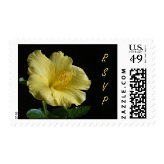 Hibiscus RSVP ~ stamp
