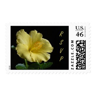 Hibiscus RSVP ~ stamp stamp