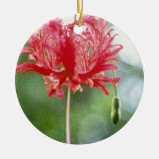 Hibiscus Schizopetalus (Fringed Hibiscus) flowers Ceramic Ornament