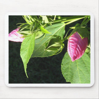Hibiscus Soon to Blossom Mouse Pads