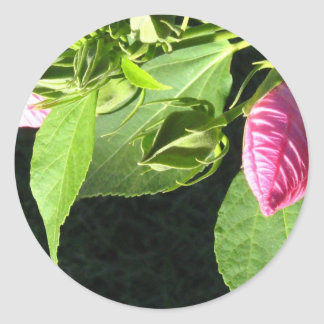 Hibiscus Soon to Blossom Round Sticker