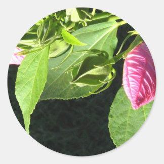 Hibiscus Soon to Blossom Round Sticker