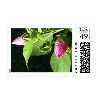 Hibiscus Soon to Blossom Stamp