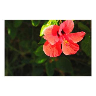 Hibiscus Stationery