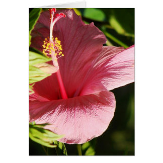 Hibiscus Stationery Card