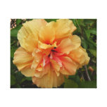 Hibiscus Stretched Canvas Print