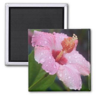 Hibiscus Tears Magnet Fridge Magnets