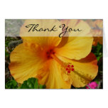 Hibiscus - Thank You Greeting Cards