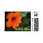 hibiscus, Thinking of You Stamps