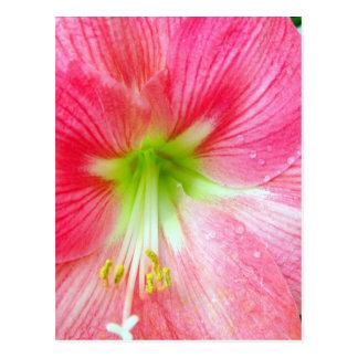 Hibiscus-Upclose Postcard