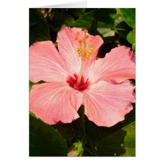 Hibiscus - V Card