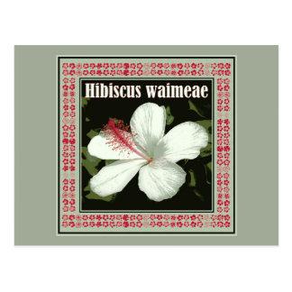 Hibiscus Waimeae from Hawaii Postcard