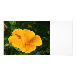 hibiscus yellow flower bright color plant flowers photo card template
