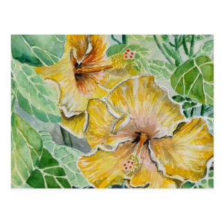 hibiscus yellow flowers postcard