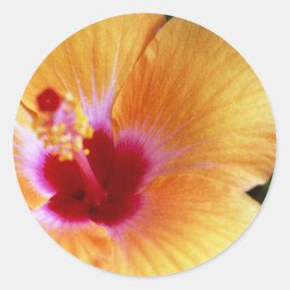 Hibiscus, Yellow-Orange Classic Round Sticker