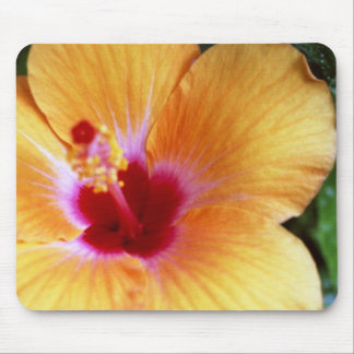 Hibiscus, Yellow-Orange Mouse Pad