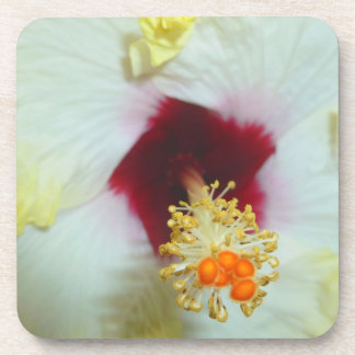 Hibiscus Yellow w Red center Beverage Coasters