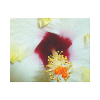 Hibiscus Yellow w Red center Gallery Wrapped Canvas