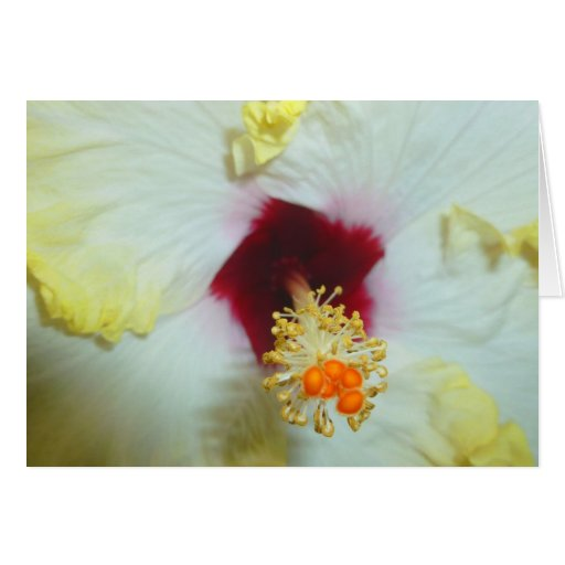 Hibiscus Yellow w Red center Card