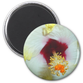 Hibiscus Yellow w Red center Magnets