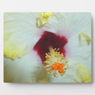 Hibiscus Yellow w Red center Plaques