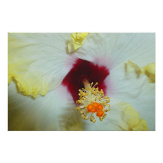 Hibiscus Yellow w Red center Print