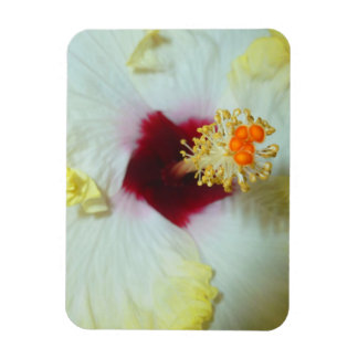 Hibiscus Yellow w Red center Rectangle Magnets